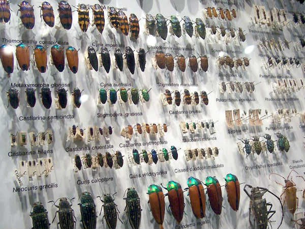india-first-insect-museum-opens-in-tamil-nadu